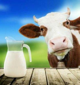 Молоко коровье