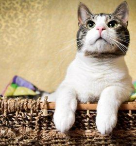 Кот Бублик, 2 года, ищет дом🐱🏡