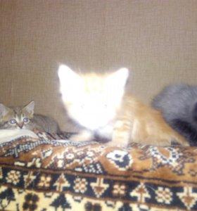 Четкие котята в хорошие руки
