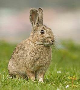Кролики с фермы
