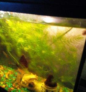 Травка в аквариум