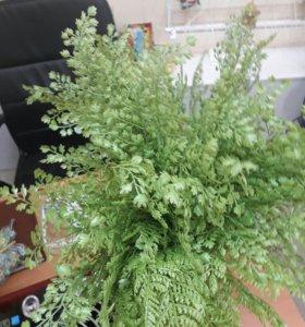 Искусственные цветы (папоротник)