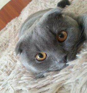 Кот для кошки