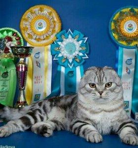 Эксклюзивные котята