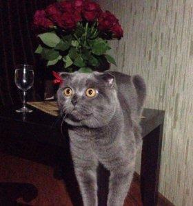 Развязанный кот