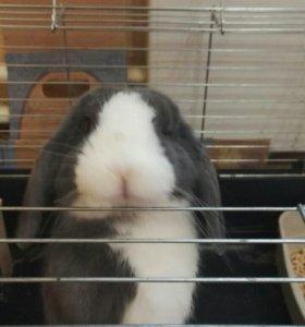 Продается красивый кролик.
