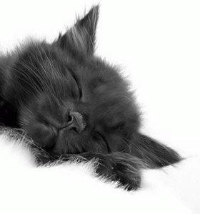 БЕСПЛАТНО котенок (девочка)