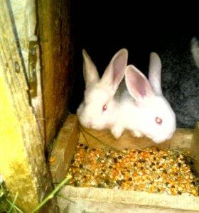 Продам кроликов.с1-4месечных.500-800р.