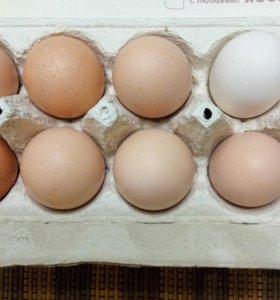 Домашние яйца.
