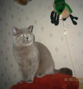 Лиловый котик приглашает на вязку