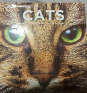 Книга с фото про кошек