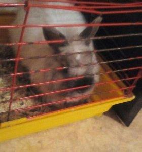 Кролик с клеткой! Продам срочно!!!!