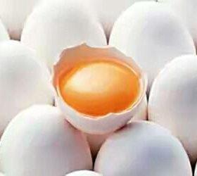 Домашее яйцо.