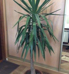 Растение домашнее