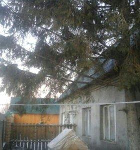 Дом+ магазин
