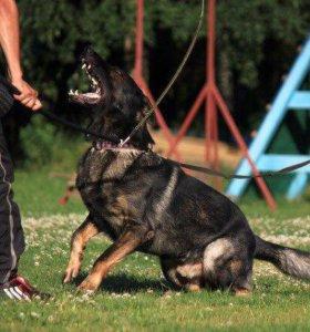 Дрессировка собак любых пород, 89265514528 Ольга.