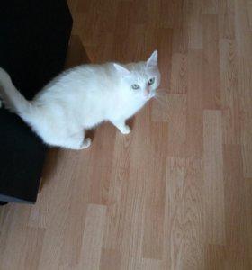 Отдам кошку в2-3 года в добрые руки, стерелизован