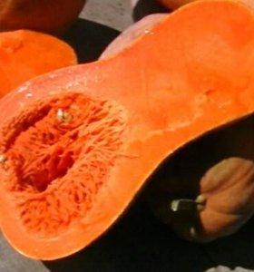 Семена мускатной тыквы 5 шт