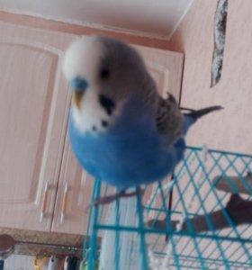 Хищный попугай