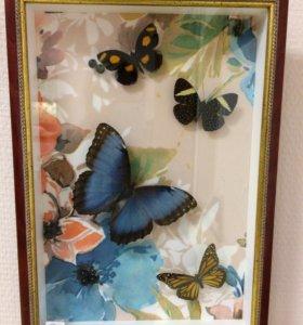 Коллаж из бабочек