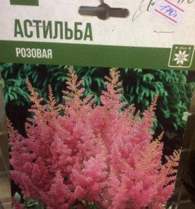 Луковица Астильбы розовый