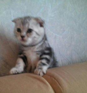 Милашки.кот ждет подружек