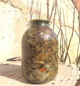 Грибы Опята оптом. 30 3-х литровых баллонов.