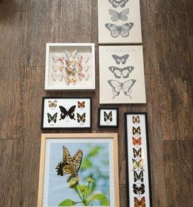 Тропические бабочки , фотография , ИКЕА бабочки