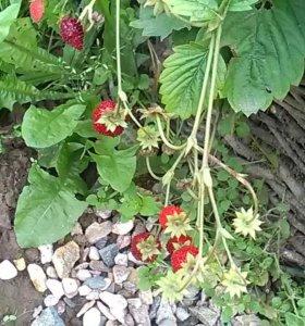 Рассада томатов, перцев, цветов
