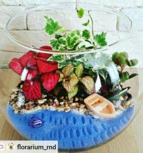 Флорариум с живыми растениями