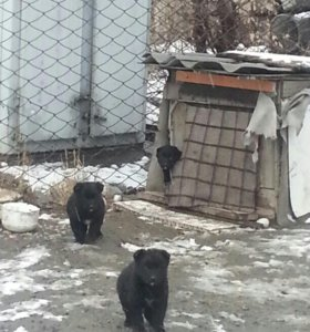 Отдам щенков