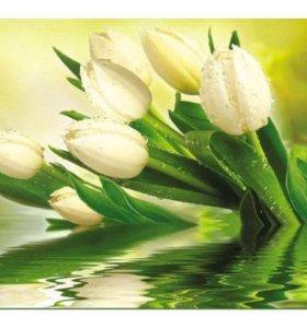 "Фотообои ""Белые тюльпаны"""