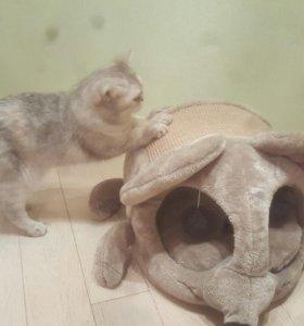 Домик - Когтёрка для кошек