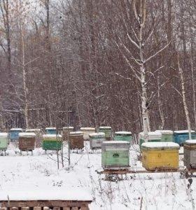 Мед натуральный от Пчеловода