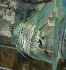Аквариумные рыбы,корм