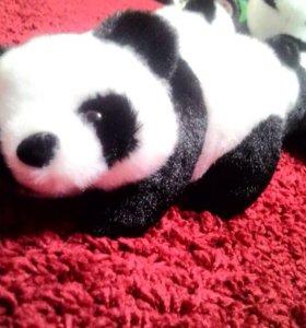 Панды новые