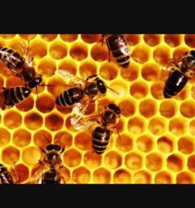 Продам пчел