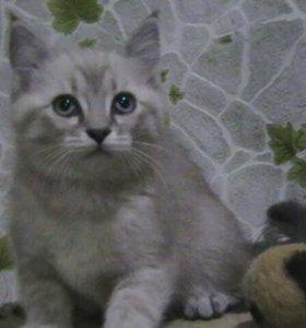 Две кошечки и котик- малыш