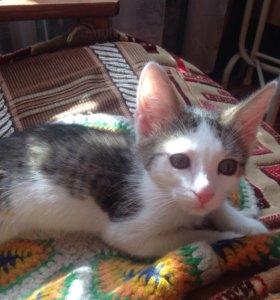 Красивый маленький кот