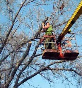 Спил Деревьев и утилизация