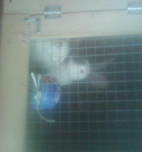 Делаем на заказ клетки для кроликов и цеплят
