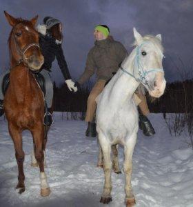 Конные прогулки на лошадях !