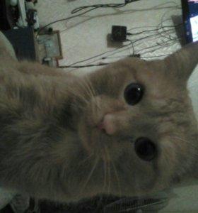 Отдам рыжего кота