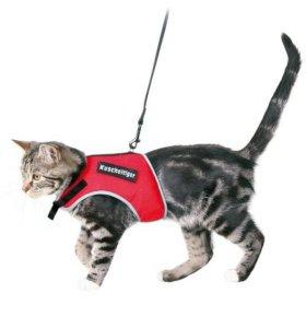 Шлейка для кошек и собак