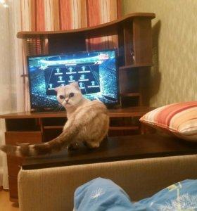 Кошка ищет кота для вязки(кто забьет гол?!)