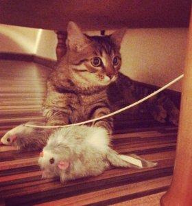 Отдам СРОЧНО котёнка в добрые руки