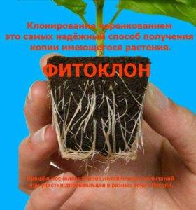 Гель Фитоклон. Укоренитель черенков