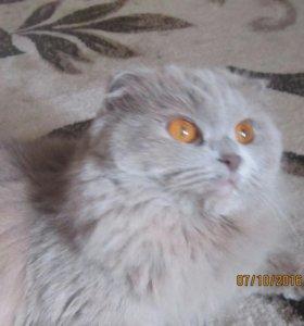 Кошка ищет котика