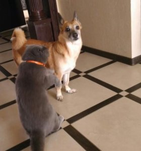 Потерялась собака Альфа!