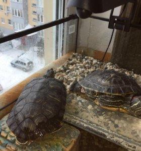 Аквариум, приспособленный для содержания черепах